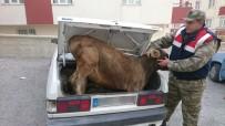 FAILI MEÇHUL - Jandarmadan Hayvan Hırsızlarına Şok Operasyon