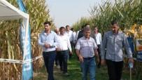 Kızıltepe'de Mısır Festivali Başladı