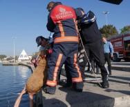 HASAN AKGÜN - Büyükçekmece'de Kanala Sıkışan Köpek Güçlükle Kurtarıldı