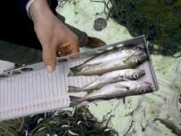 1 EYLÜL - Ordu'da 22 Balıkçıya Ceza