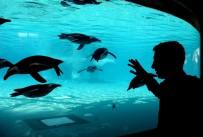 HAYVANAT BAHÇESİ - Hayvanat Bahçesinin Gözdesi Penguen Ve Foklar