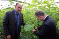KADIR PERÇI - Genç Çiftçi Projesinde Serada Üretime Başlandı