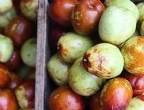 KUZEY AFRIKA - 'Ölümsüzlük meyvesi' için bakanlık harekete geçti