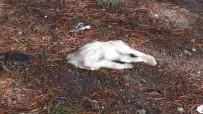 AHMET YıLMAZ - Yavru Köpeği Başsız, Annesini Kanlar İçinde Buldu