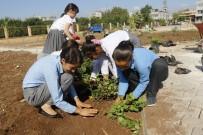 KAZANLı - Akdeniz'de Parklar Ve Bahçeler Rengarenk Oluyor