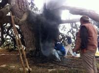 KÖY MUHTARI - Dilek Dilemek İçin Yaktığı Mum 700 Yıllık Çam Ağacını Yaktı