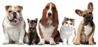 Evcil Hayvanlarla Uçak Seyahati Nasıl Yapılır?