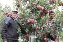 KATAR - Karaman'da Hasadı Başlayan Elma Yüz Güldürüyor