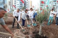 ZEYTINLI - Mezitli'nin Zeytinli Caddesi Zeytin Fidenlarıyla Donatıldı