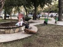 KÜLTÜR FIZIK - Adana'daki Sokak Köpekleri Onun Yolunu Gözlüyor