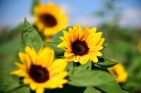 SOĞUK HAVA DEPOSU - Adana'dan Hollanda'ya 2.5 Milyon Dal Çiçek