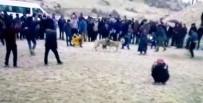 ÜÇGÖZ - Besni'de Köpek Dövüştürüp, Bahis Oynayanlara Baskın