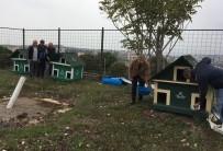 HAYVAN SEVERLER - Darıca'da Sokak Hayvanlarına Özel Çalışma