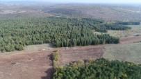 ORMAN GENEL MÜDÜRLÜĞÜ - ' Kara Elmas' Trüf Mantarının Doğadan Toplanma Macerası Havadan Görüntülendi