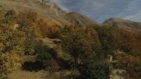 YAYLA TURİZMİ - Bahçesaray'da Sonbahar Güzelliği