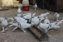 BUZDOLABı - Binlerce TL'lik Güvercinlere 4 Kapı Ve Kameralı Güvenlik
