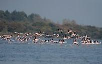 DENİZ FENERİ - Flamingolar Türkiye'yi Sevdi