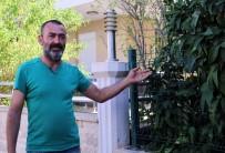 SOKAK KÖPEĞİ - Antalya'da sokak köpeği katledildi