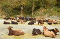 ÇORUH NEHRİ - Doğu Karadeniz'de Orman Köylüsüne 10,2 Milyon Liralık Destek