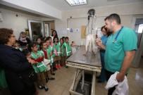 SOKAK HAYVANI - Dünya Hayvanları Koruma Günü Öğrencilerle Kutlandı