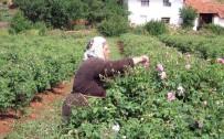 Gülçiçeği Taban Fiyatı 8 Lira 70 Kuruş