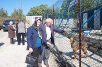 HAYVAN SEVERLER - Lapseki'de Dünya Hayvanları Koruma Günü Etkinlikleri