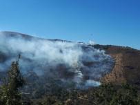 ORMAN MUHAFAZA MEMURU - Sultanhisar'da Kestanelik Yangını