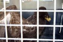 İĞNEADA - Yaralı Baykuş Ve Kartal Tedavi Altına Alındı