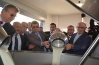 ALİ FUAT TÜRKEL - Bafra'da Damızlık Manda Üreticileri Birliği Süt Toplama Merkezi Açıldı