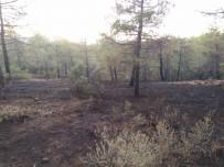 Erken Müdahale Ormanı Kurtardı