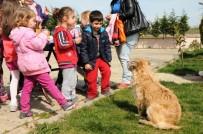 MİRKELAM - Tekirdağ'da 'Mutlu Pati' Şenliği