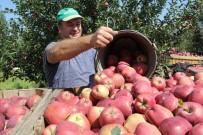 EKOLOJIK - Her Beş Elmadan Biri Isparta'da Üretiliyor