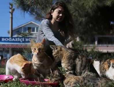 Kedilerin gönüllü bakıcısı