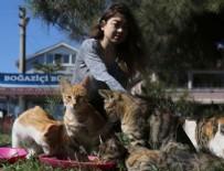 HAYVAN SEVERLER - Kedilerin gönüllü bakıcısı