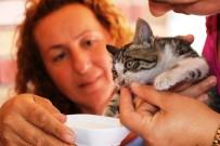 YAVRU KEDİ - Mahsur Kalan Yavru Kedi, Cep Telefonundaki Kedi Sesi Sayesinde Kurtarıldı