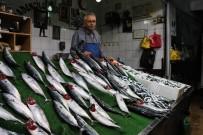 1 EYLÜL - Balıkçılar Umduğunu Bulamadı