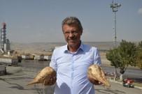 NİŞASTA BAZLI ŞEKER - Kayseri Pancar Kooperatifi Yönetim Kurulu Başkanı Hüseyin Akay Açıklaması