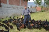 ORGANİK YUMURTA - Kızı İçin Tavuk Çiftliği Kurdu, Organik Yumurta Üretiyor