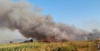 ZEYTINLI - Sazlıkta Çıkan Yangın Korkuya Neden Oldu