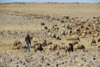 KARACADAĞ - Diyarbakır'da Hayvancılar, 3 Bin TL'ye Çalışacak Çoban Bulamıyor