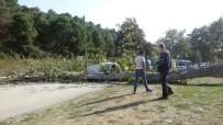 ÇILINGIR - Otomobilin Üzerine Ağaç Devrildi
