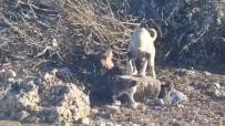 SOKAK KÖPEĞİ - Sokak Köpeğinin Kedilerle Dostluğu