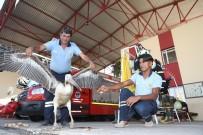 PELIKAN - Yaralı Pelikanı İtfaiye Ekipleri Kurtardı