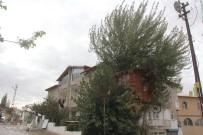 AHŞAP EV - Ağaç Evin Yürek Burkan Öyküsü