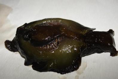 Çanakkale Boğazı'nda deniz tavşanı karaya vurdu