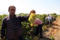 HOŞKÖY - Elazığ'da En 'Hoş Üzüm' Hasadı
