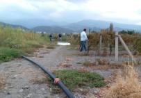 CİNAYET ZANLISI - Manisa'da Üzüm Bağlarında Cinayet