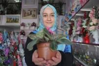Genç Girişimci İlçesinin İlk Çiçekçisi Oldu