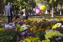 HERCAI - Sonbahar'da 374 Bin 500 Adet Kasımpatı Ve Menekşe Dikimi Yapıldı