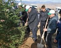 ENDER FARUK UZUNOĞLU - Suşehri'nde Hatıra Ormanına 5 Bin Fidan Dikildi